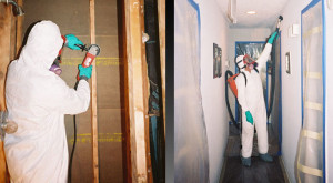 mold remediation technicians